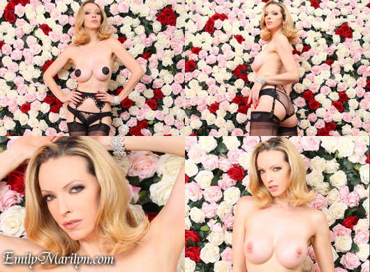 Emily Marilyn beautiful rose